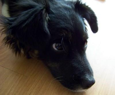 Jake puppy love