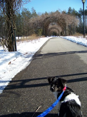 Jakes first walk at mohegan park bridge