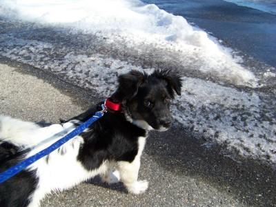 Jakes first walk at Mohegan Park